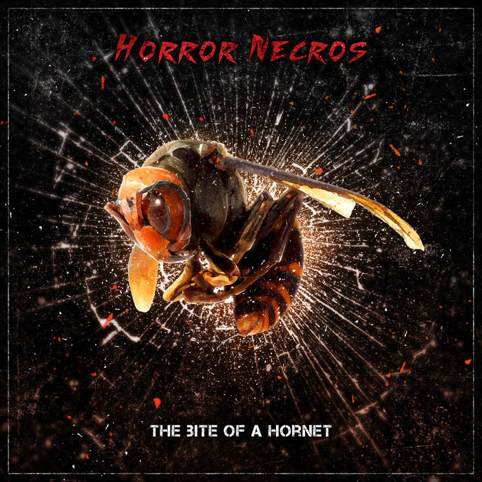 Download torrent Horror Necros - The Bite Of A Hornet (2015)